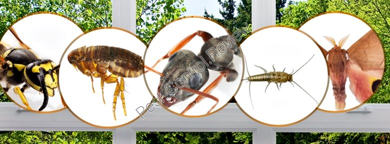 Pest Control Proposal Letter Click Here